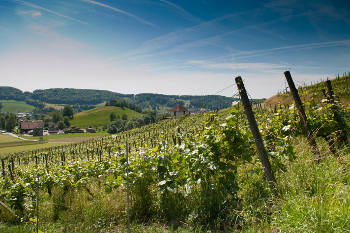 Wine tours: Why roam into the distance ...